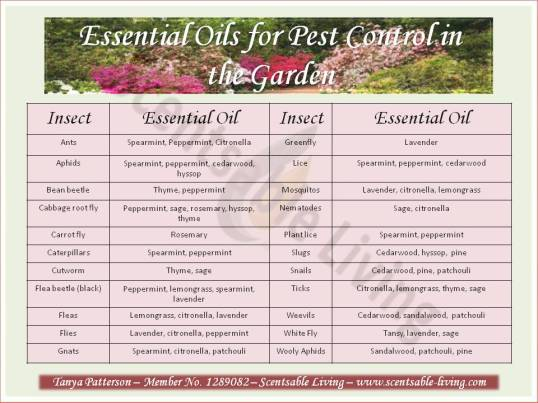 Essential oils in the Garden1