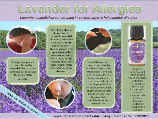 Lavender for Allergies