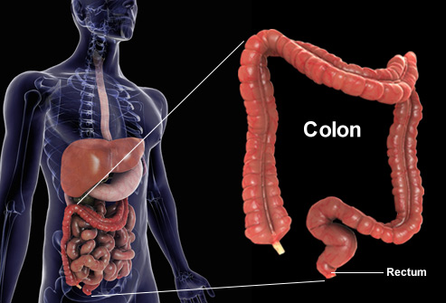 getty_rm_photo_of_colon_composite